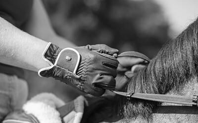 Meer trainingseffect met minder hulpen – wegwijs in hulpen