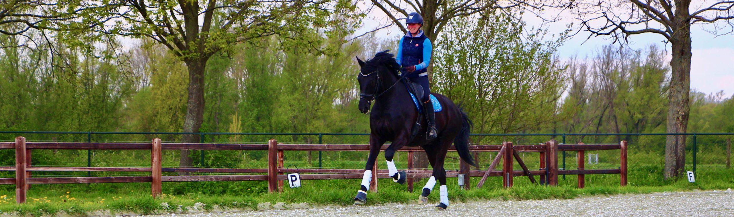 nageven paard