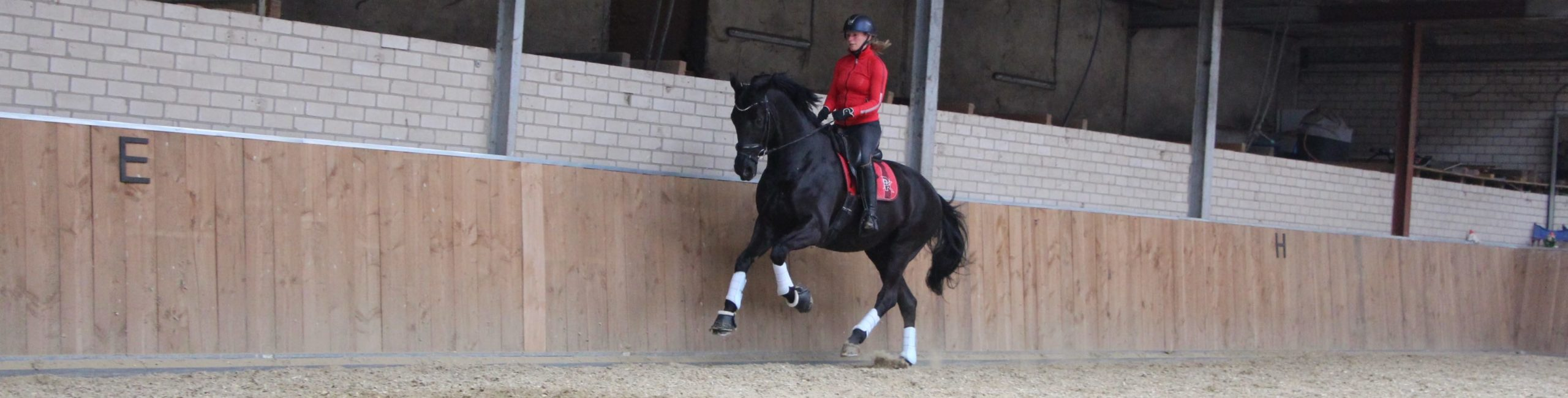 paard reageert niet op hulpen