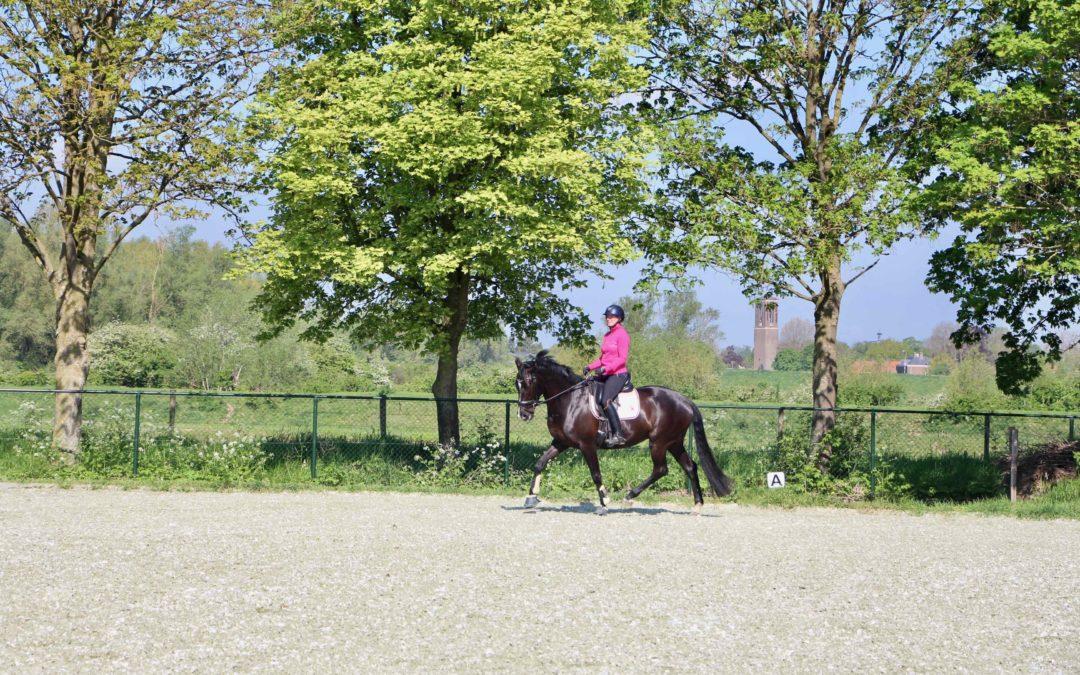 Paard komt terug in tempo op de volte