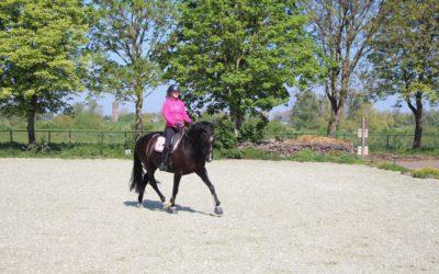 Snelle tip voor als je paard sterk is op 1 teugel