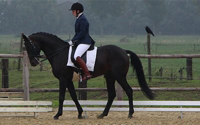 Hoe je achterwaarts gaan kan inzetten bij de training van je paard