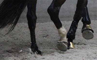 Drie tips voor als je paard de hoek niet door wil of juist aan de wand blijft plakken