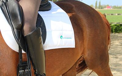 Hoe leert je paard?