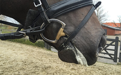 Schuim op de mond van je paard, goed of niet?