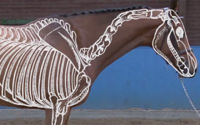 Het skelet van een paard