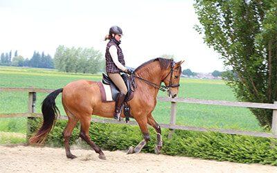 Tempo, hoe voorwaarts moet je je paard rijden?
