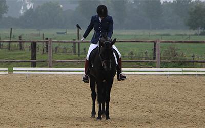 Hoe kan je je paard vierkant laten halthouden