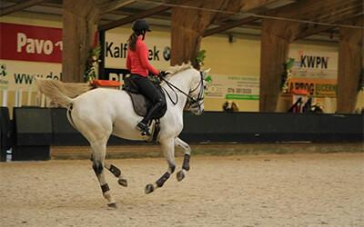 Drie redenen waarom je paard de vliegende galopwissel in tweeën springt of naspringt